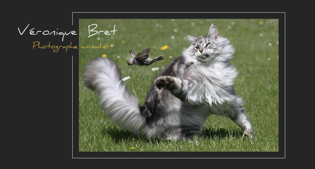 Véronique Bret - Photographe animalier - Chats, Chiens et autres ...: veronique-bret.com